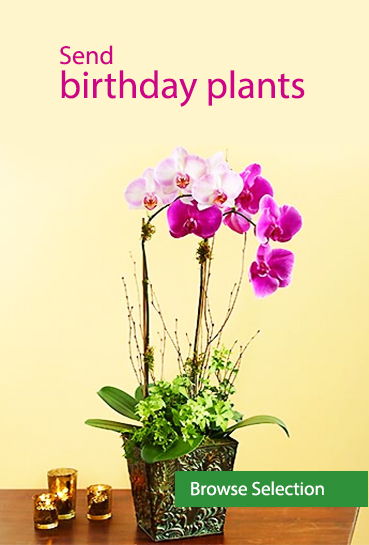 Send birthday plants