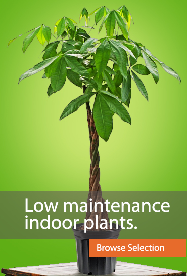 Low maintenance indoor plants.