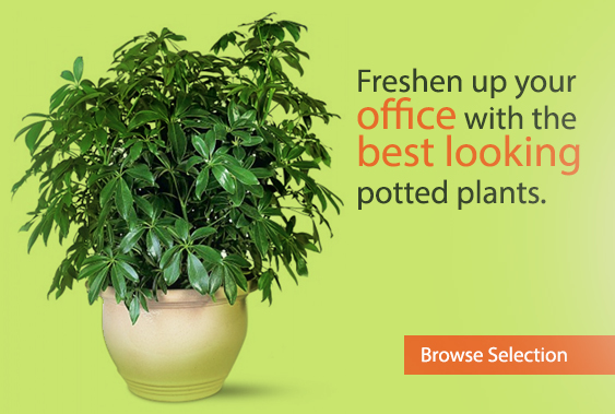 Freshen up your office with the best looking potted plants.