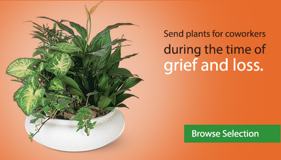Send plants for coworkers during the time of grief and loss.
